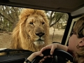South Africa Wildlife