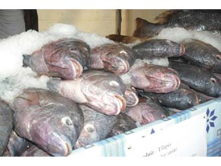 Cameroon poissons
