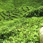 Guinée équatorial Agriculture
