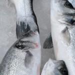Guinée équatorial fisheries