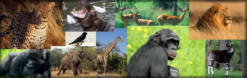 DRC Eco-Tourism