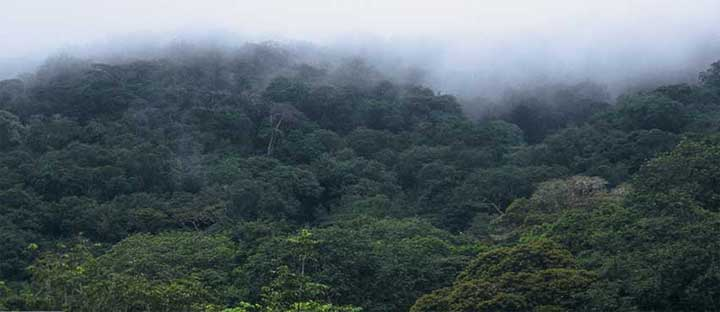 Congolese forest global green lung