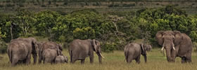 LAIKIPIA, KENYA
