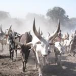 SOUTH SUDAN LIVESTOCK 1